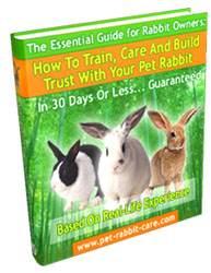 rabbit hutch plans   rabbit cage plans   freeww